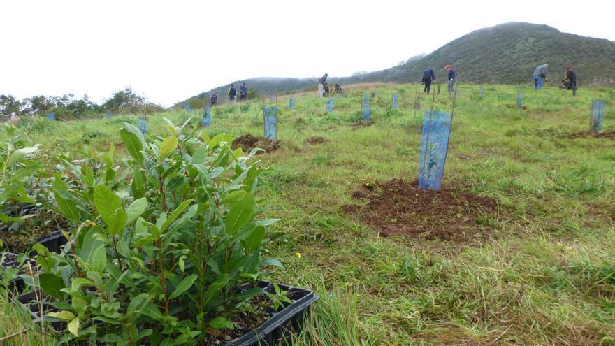 Plantaciones de árboles en Gran Canaria.