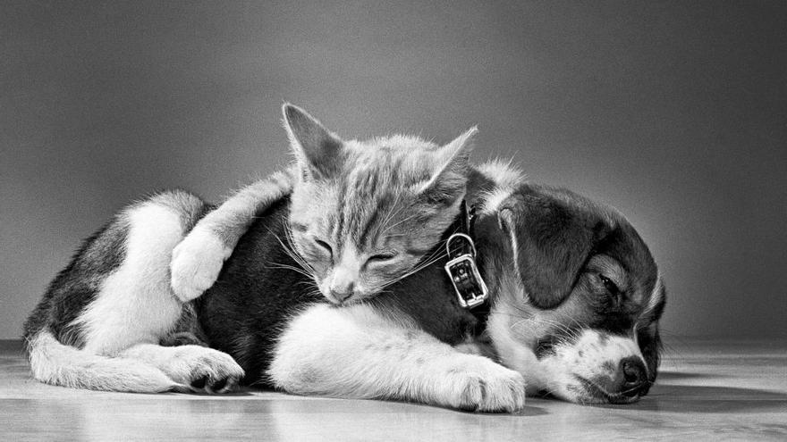 Un perro y un gato recostados mientras duermen. Nueva Jersey, 1966.