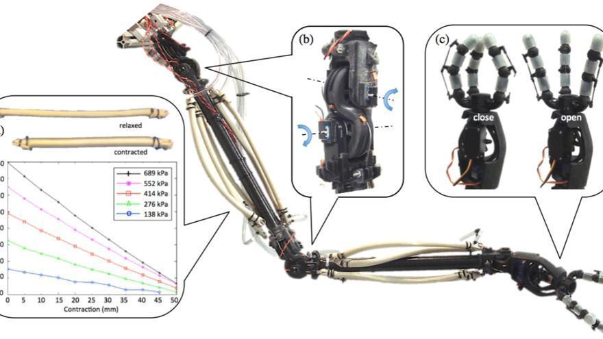 Un esqueleto duro y pesado puede ser un problema para un 'soft robot'