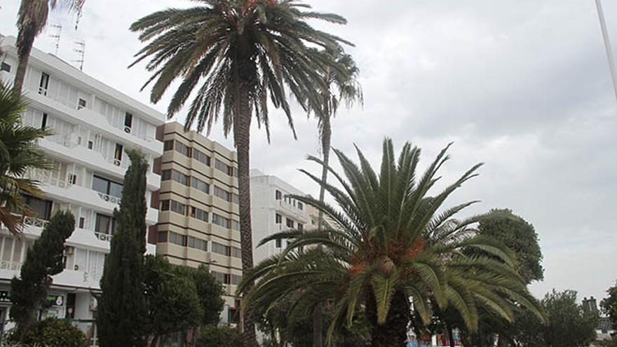 La alta Washingtonia, la palmera canaria, un cardón... Uno de los jardines de Arrecife.