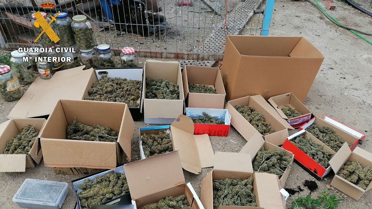 Marihuana aprehendida en Dos Torres.