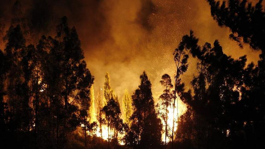 Un incendio forestal destruye más de 5.000 hectáreas de bosque nativo en Perú