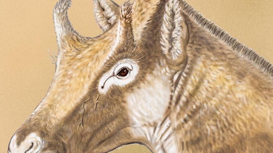Recreación del 'Xenokeryx Amidalae' / Las Noticias de Cuenca