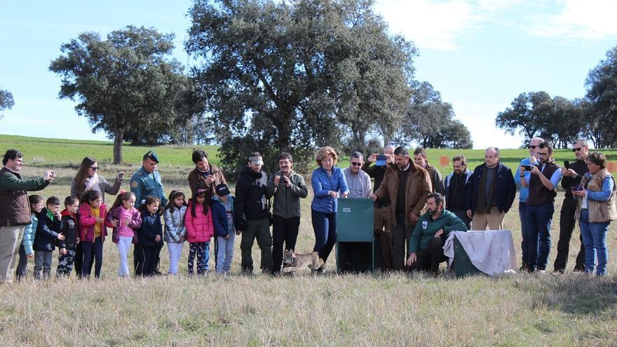 Liberados dos ejemplares de lince ibérico en el bosque mediterráneo de Sierra Morena Oriental