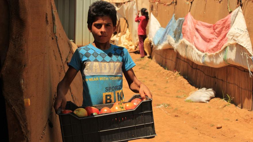 Salem, de 13 años, trabaja en los campos del valle de Becá (Líbano). Su padre, enfermo y sin recursos para pagarse el medicamento, tuvo que admitir de mala gana que su mujer y sus hijos trabajaran para pagar el alquiler. / Ahmad Baroudi / Save the Children.