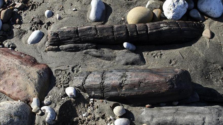 El temporal deja al descubierto árboles de 300 millones de años en Asturias