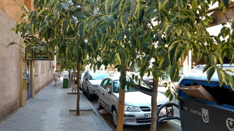 Algunos de los nuevos árboles procedentes de la última campaña de plantaciones