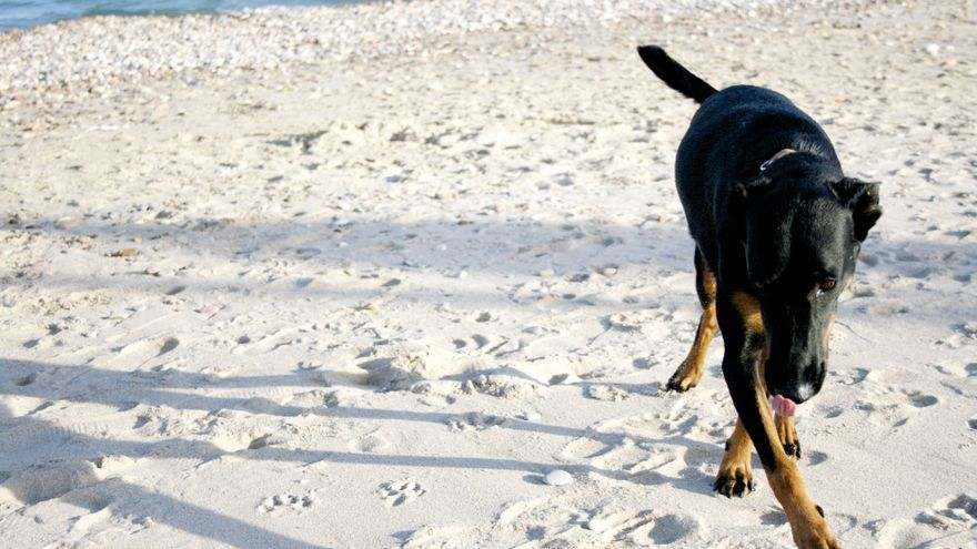 Una perra disfrutando de la playa (foto cedida a El caballo de Nietzsche)
