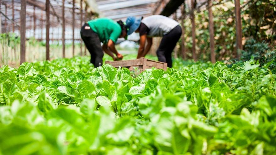 El cultivo agroecológico