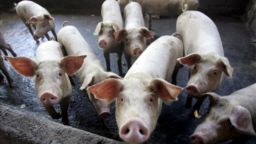 Rusia estudia limitar las importaciones de carne de cerdo procedente de Brasil