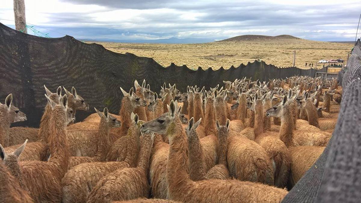 La escena en La Payunia: un territorio de más de 25.000 km2, al sudeste de la provincia de Mendoza, donde se encuentra El Payún Matrú, uno de los volcanes de mayor magnitud (3.715 metros) que comenzó a formarse hace unos 150.000 años.