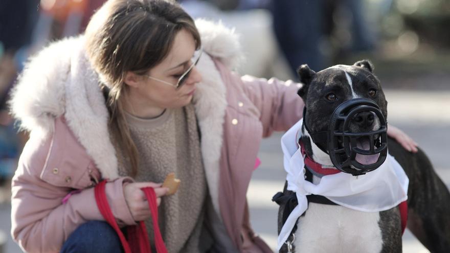 La nueva ordenanza municipal de animales endurece las sanciones y obliga a mitigar los orines en la calle