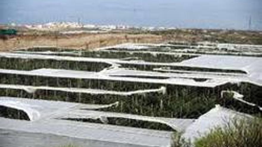 Canarias pagará medio millón a un agricultor