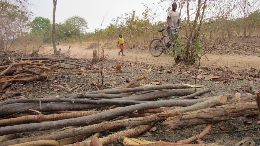 Troncos cortados en una zona de bosque en la zona de Pirada (Guinea Bissau) / Foto: José Naranjo