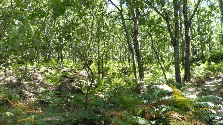 El 68% de la madera que consumen las empresas de Euskadi procede de bosques vascos