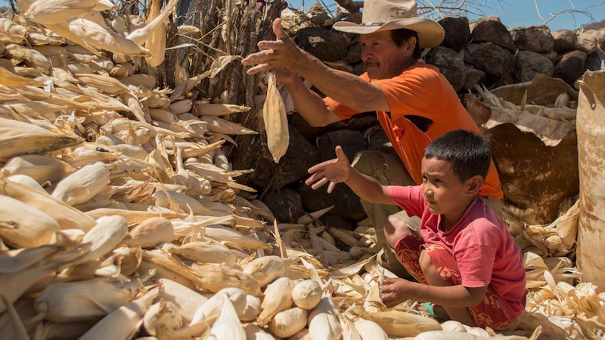 Para responder a la sequía es vital la reserva de granos (Ayuda en Acción/Arnulfo Coto)