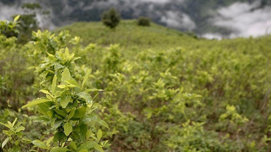 Temor a un aumento de cocaína a Europa por proceso paz en Colombia, dice Spiegel