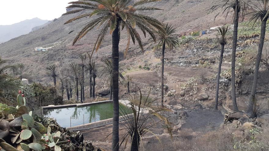 El Cabildo aprueba 600.000 euros para los afectados del incendio de Tasarte