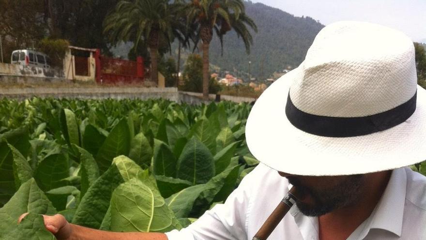Fabrizio Gentile en la plantación de tabaco de La Fábrica.