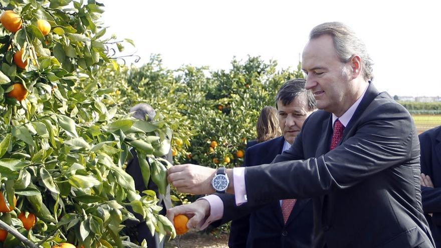 Alberto Fabra, durante una visita a un campo de naranjas