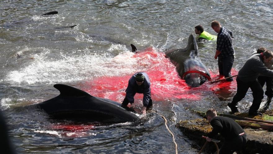 Caza ilegal de ballenas en las Islas Feroe. Foto: Sea Shepherd