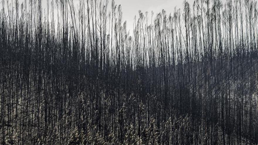 al menos casas y empresas fueron afectadas por el incendio de portugal