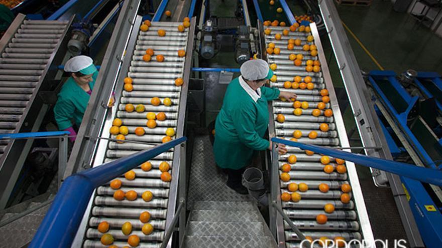 Dos mujeres trabajando en una empresa de naranjas en Palma del Río | MADERO CUBERO
