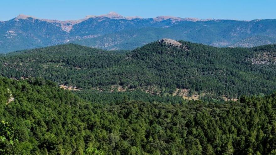 Sierra de Ciudad Real FOTO: Un bosque de oportunidades