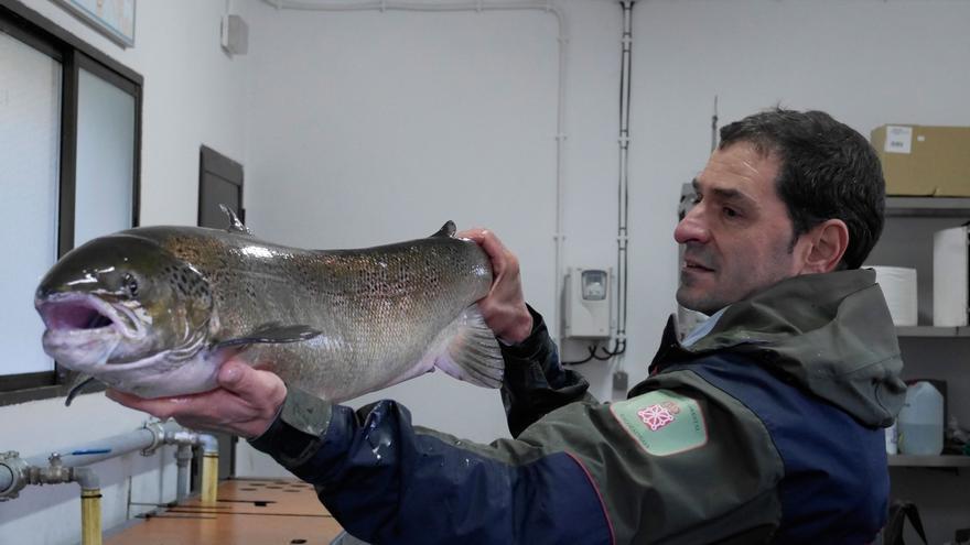 Encontrado un salmón hembra de 9 kilos y un metro de longitud en la Nasa del Bidasoa situada en Bera