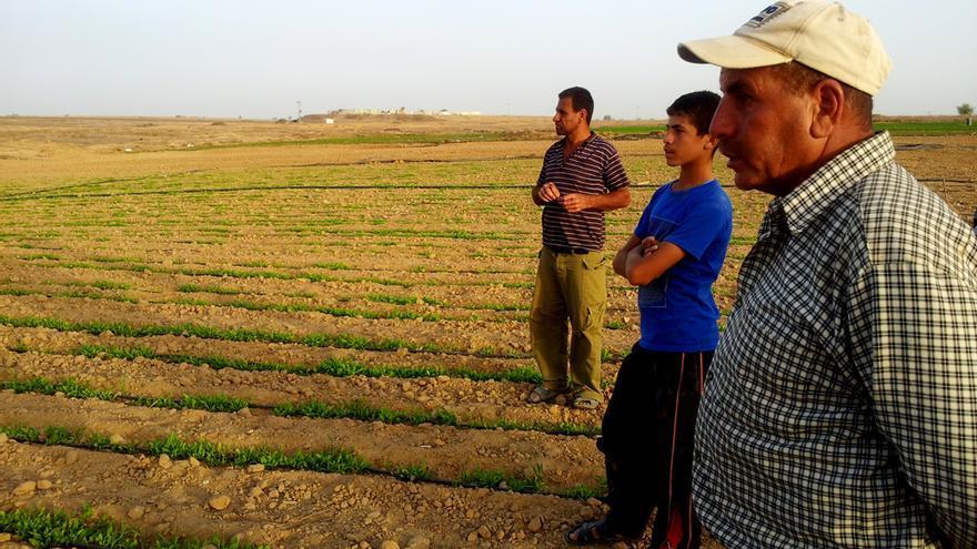 Un grupo de agricultores deja de trabajar al aparecer una patrulla de soldados israelíes en la línea verde. Foto: Isabel Pérez