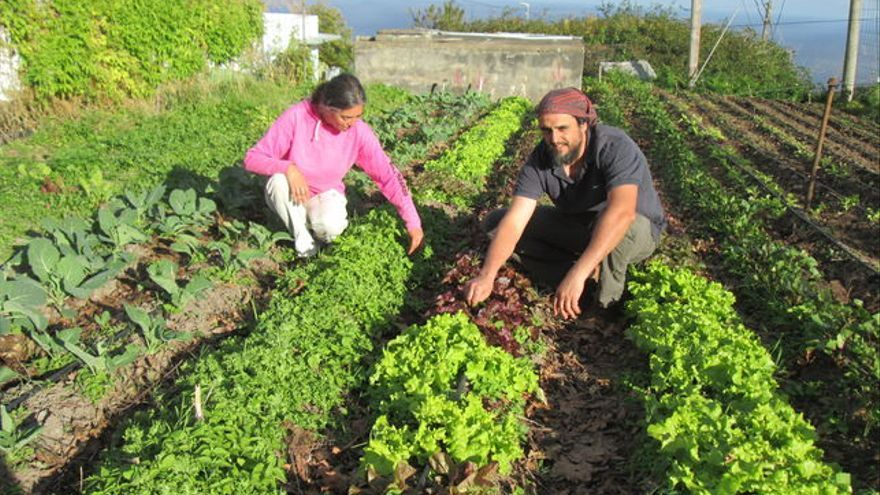Horticultores en agricultura ecológica, en la isla de La Palma