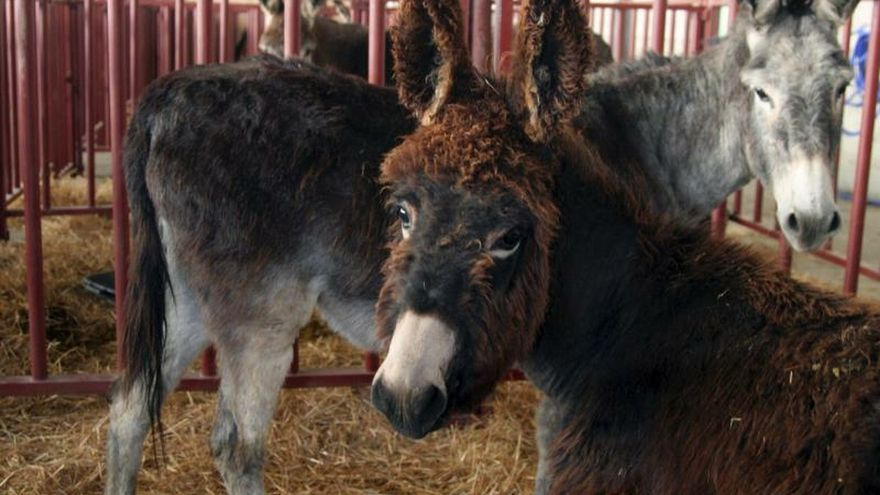 De Aranjuez a Virginia: los dos burros que España regaló a George Washington