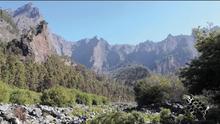 La Caldera de Taburiente alberga el mayor bosquete de sauces de Canarias