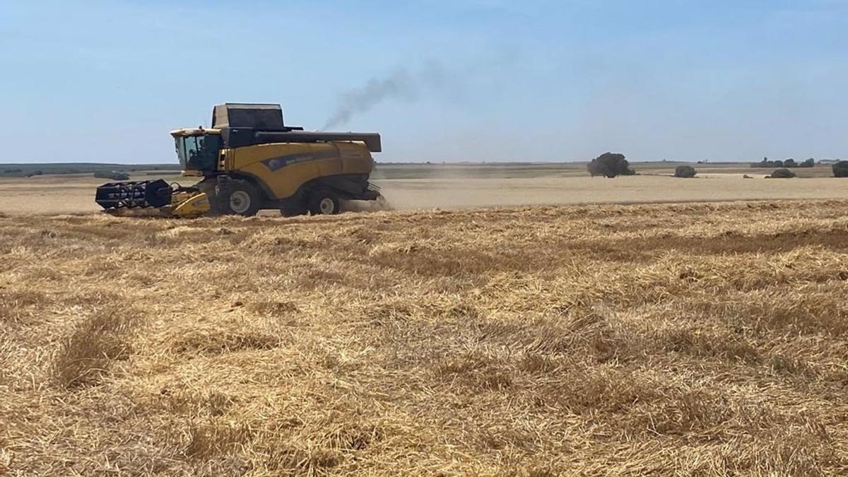 Una máquina cosechadora durante la recolección de cereales.