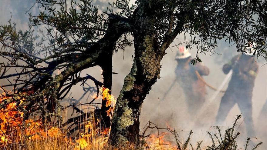 Más de 500 bomberos tratan de sofocar dos grandes incendios en Portugal