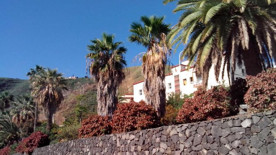 Palmeras en el barrio de San Telmo. Foto: PP.