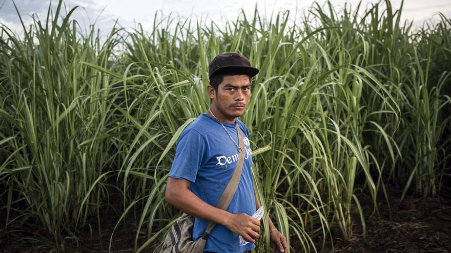 Un trabajador nicaragüense en una plantación de caña.