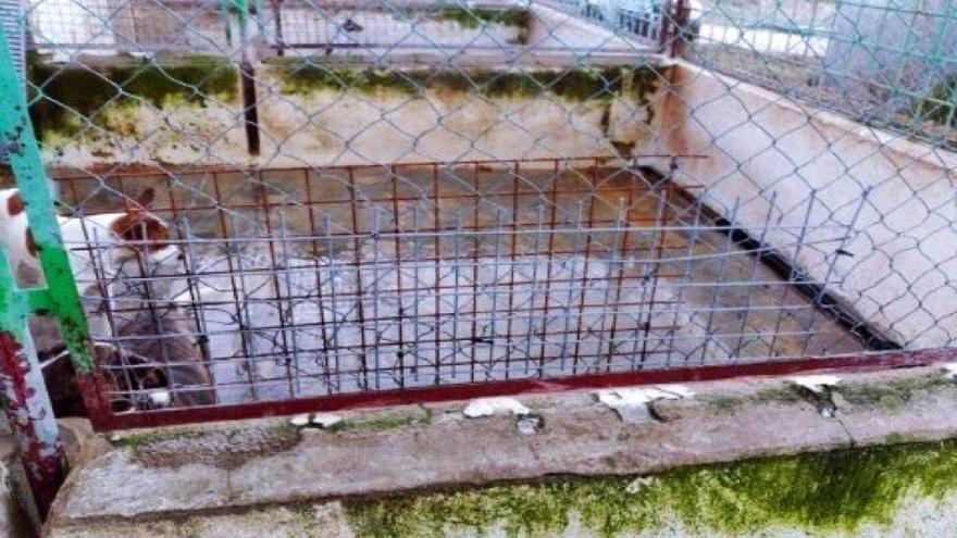 En 2017, El caballo de Nietzsche se hizo eco de las penosas condiciones en las que se encontraban los perros en la perrera municipal de Jaén