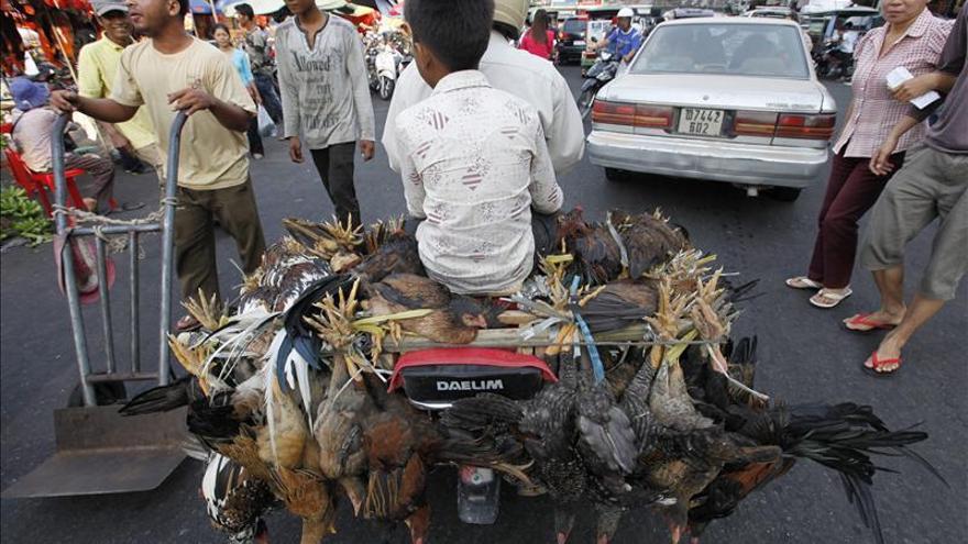 La gripe aviar causa la décimo segunda muerte en Camboya en lo que va de año