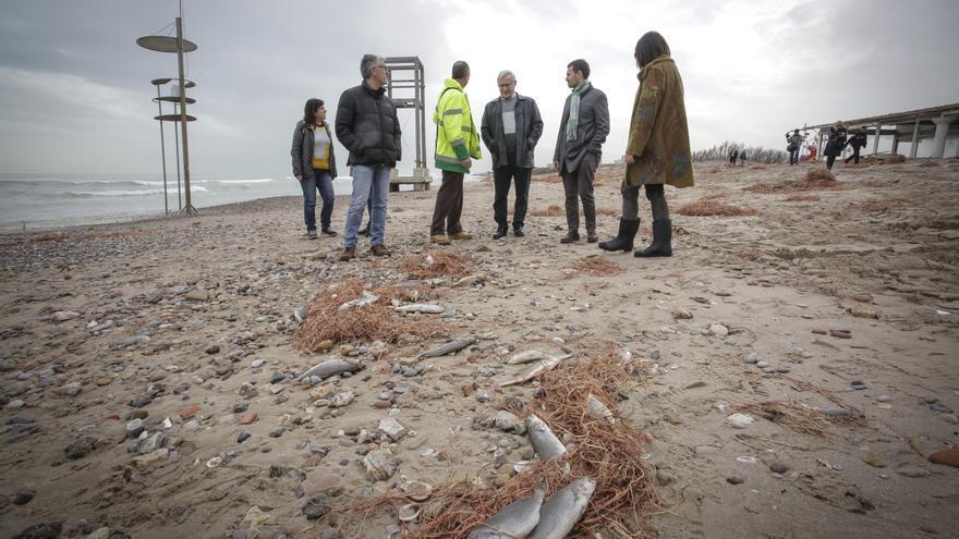 El alcalde de València en las playas del sur afectadas por el temporal frente a varios peces muertos