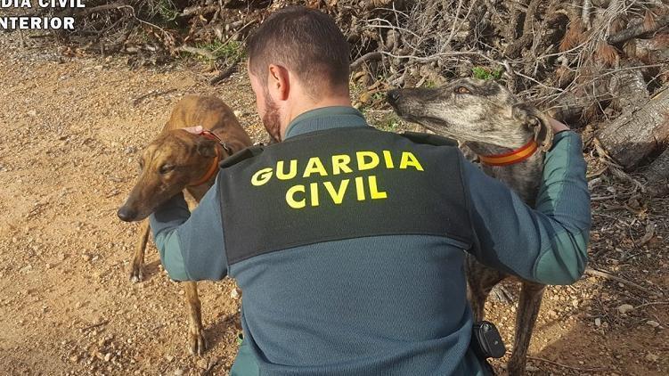 Nueve detenidos por caza furtiva con galgos en distintos cotos de la provincia de Albacete