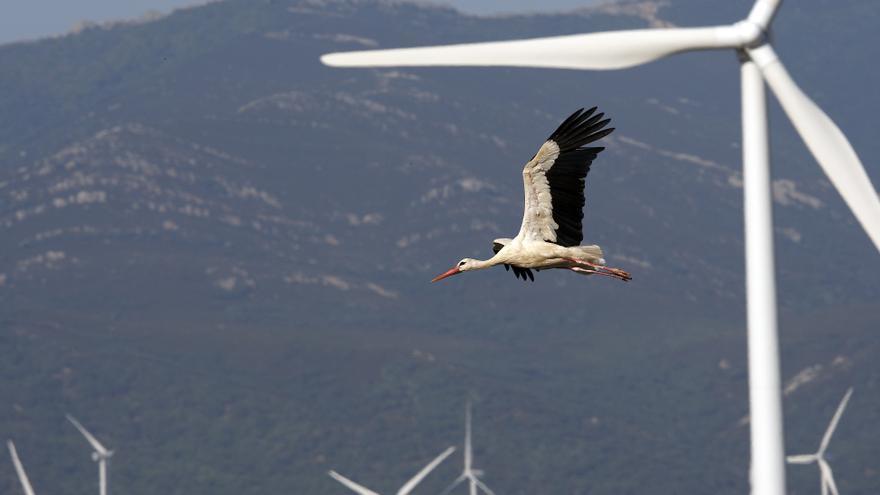 Una cigüeña vuela en un parque eólico en Tarifa (Cádiz). El choque de grandes pájaros provoca la inutilización de las torres. Gtres