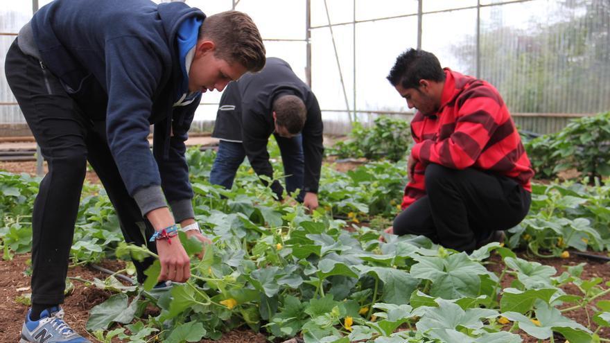 Alumnos del curso de la Escuela de Capacitación Agraria de Canaria.