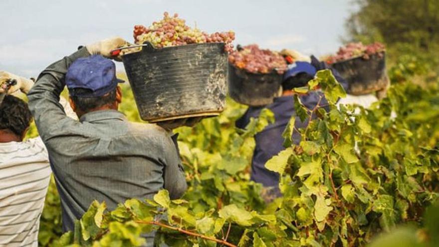 El Gobierno prorroga las medidas extraordinarias del empleo agrario hasta el 30 de septiembre