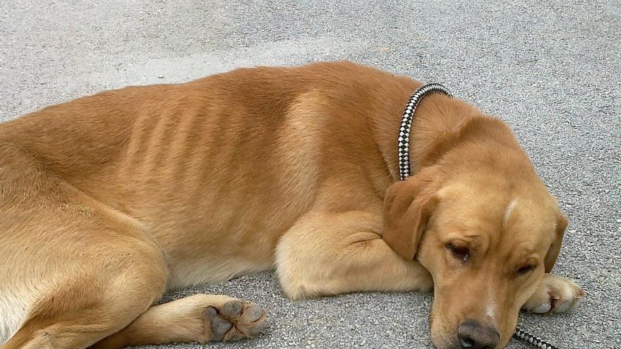 La Protectora de Málaga recoge casi un millar de animales abandonados durante el primer semestre