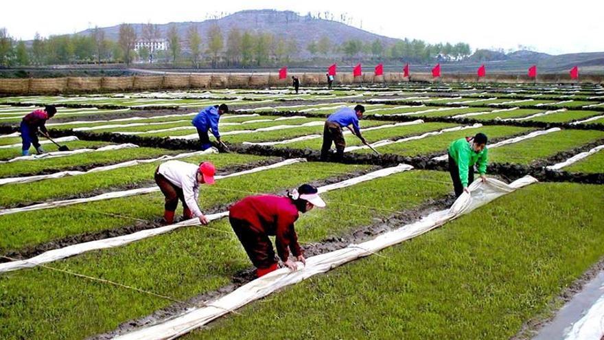 La producción de alimentos en Corea del Norte cae por falta de agua, según la FAO