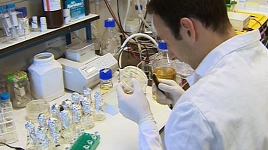 Científicos de EE.UU. localizan en el sodio la clave para combatir la malaria