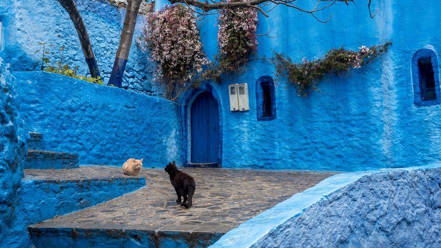 Gatos en la medina; los gatos reinan a sus anchas en la parte vieja de la ciudad. Juergen Heitmann (CC)
