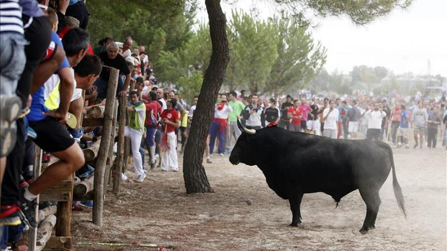 Instantánea de la celebración del Toro de la Vega