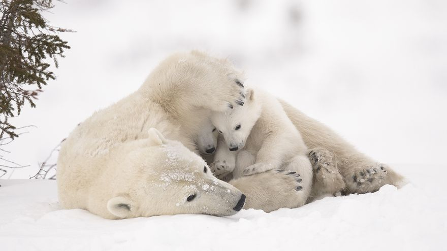 'Abrazo cálido'